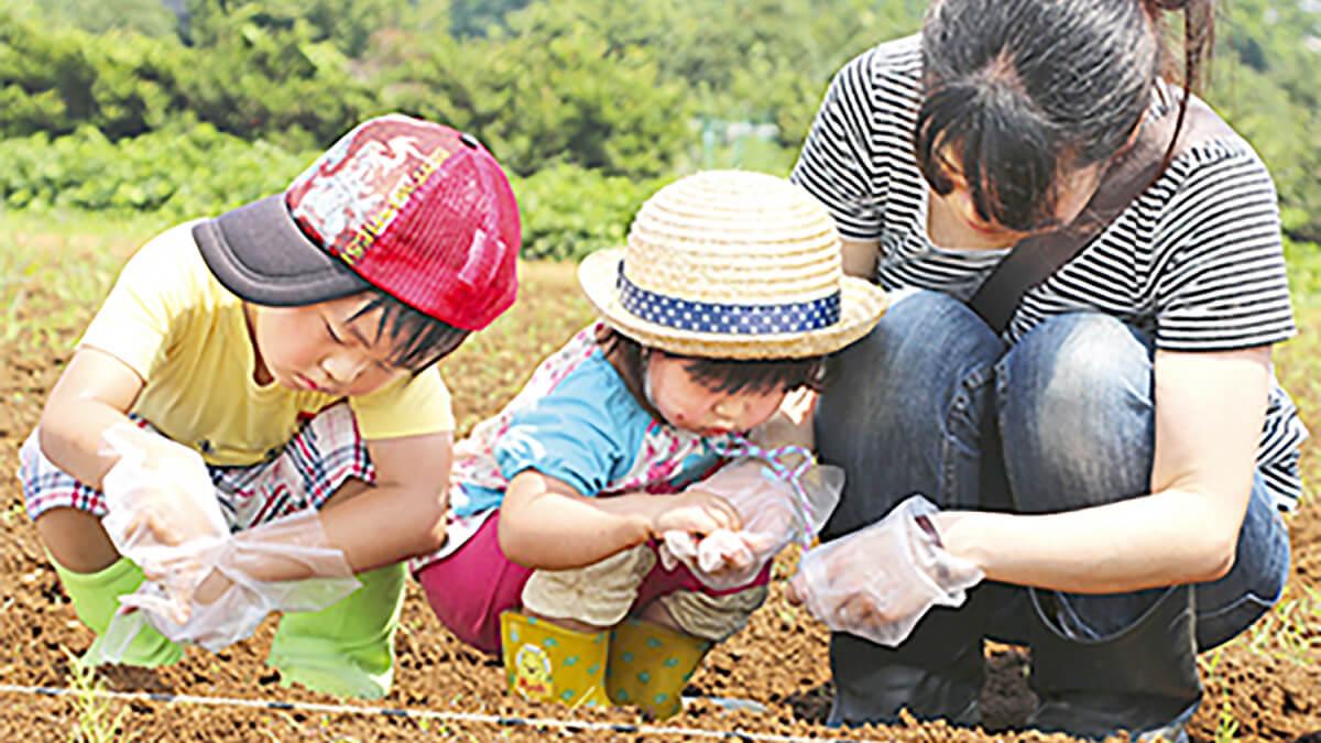津久井在来大豆の種まきをする母親と子供たち